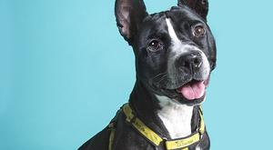 Diamond is just one of the dogs up for adoption from Dogs Trust
