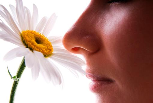Smell is much more important to us than we think, strongly influencing human behaviour, eliciting memories and emotions, and shaping perception (Stock picture)