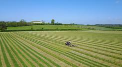 Silage being cut and picked up by Byrne Agri Contractors in Stabannon Co Louth. Photo: Jan Jensma.
