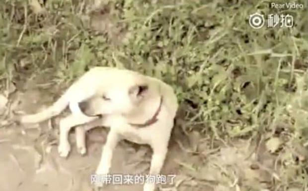 The owner of the dog, Yang Jiali, said she discovered the baby boy when the animal began frantically digging at a hole