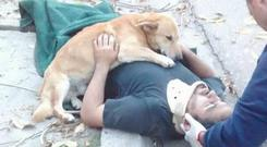 Dog hugs injured owner. Photo: Def Civil B. Blanca
