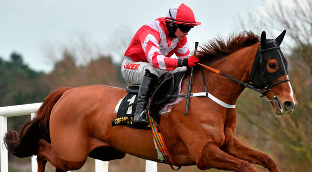 Acapella Bourgeois is to join Willie Mullins. Photo: Matt Browne/Sportsfile
