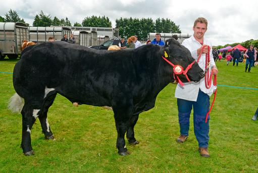 Pictured with his junior champion Belgium Blue bull at Bandon show was Daniel O'Donovan from Dunmanway, Co Cork. Photo: Denis Boyle