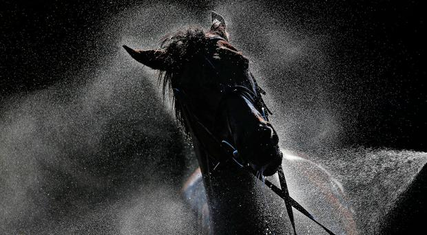 A horse being hosed down after racing at Goodwood yestersday. Photo: Getty