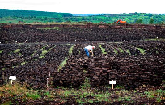Turf is being footed at Rockingham Bog, Co. Roscommon. Photo: Brian Farrell