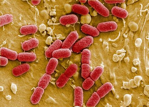 The World Health Organisation warns antibiotic resistance is one of the biggest threats to global health, food security and development. Stock picture