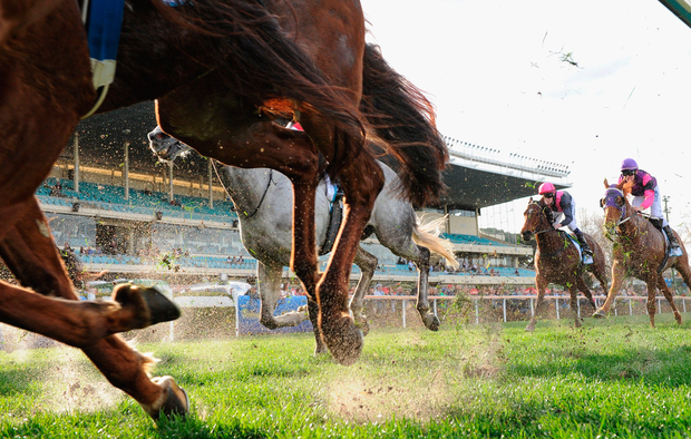 Treacy has prospects of a winner in Midnight Surprise. Photo: Getty/Stock image
