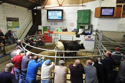 GALLERY: Click here to see more pictures and prices from Enniscorthy Mart.
