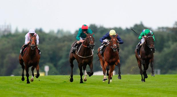 Growl (yellow cap), pictured here winning at Ascot, is fancied to score again in the John Of Gaunt Stakes at Haydock today. Photo by Alan Crowhurst/Getty Images