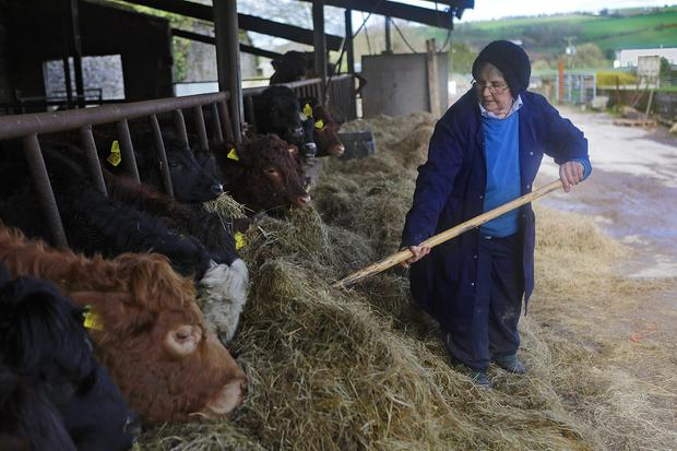 Sr Lily Scullion is manager of the 250 acre farm at Glencairn Abbey, Co.Waterford, 50 acres of which is woodland. They specialise in dry stock, tillage, wheat, barley, potato and fodder beat.Photo:Valerie OSullivan