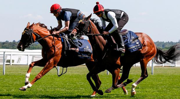 Jamie Spencer riding Happy Like A Fool (L) with Ryan Moore riding Princess Peggy (R) in a track gallop at Ascot yesterday. Photo: Alan Crowhurst/Getty Images