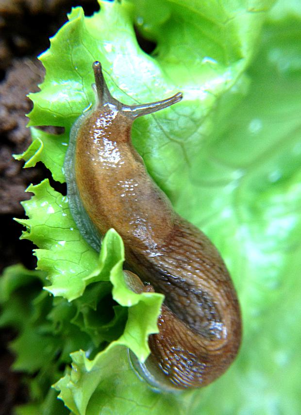 SLUGS: Endless quest for food