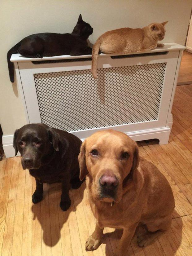 Katherine Higgins' pets Monty and Daisy. Pic: Twitter