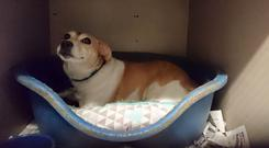 Jack Russell and beagle cross Angel has found a home after seven years spent in an animal shelter