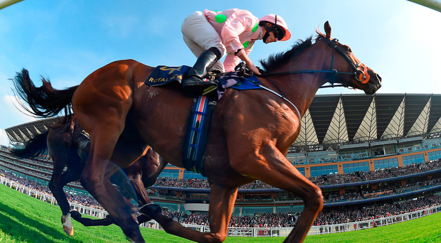 Thomas Hobson, with Ryan Moore up, on the way to winning the Ascot Stakes yesterday. Photo: Getty Images