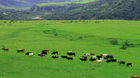 The Argentinian pampas is some of the richest beef rearing land in the world