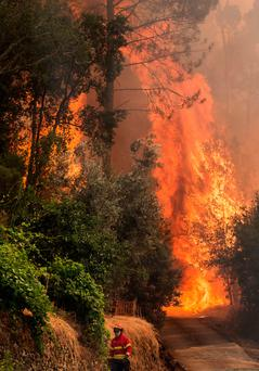 A firefighter walks close to a wildfire in Carvalho, central Portugal. Photo: AFP/Getty