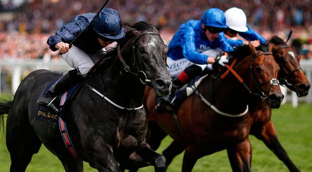 Caravaggio, with Ryan Moore up, on the way to winning The Commonwelth Cup at Royal Ascot yesterday. Photo by Alan Crowhurst/Getty Images for Ascot Racecourse
