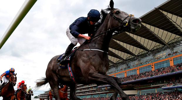 Ryan Moore on Winter wins the Coronation Stakes at Royal Ascot where trainer Aidan O'Brien had the first three horses home. Photo by Mike Hewitt/Getty Images