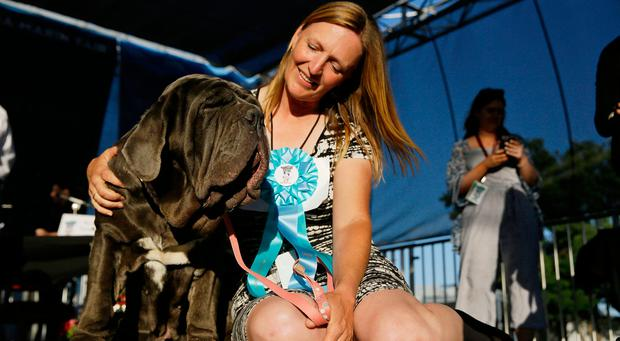 Shirley Zindler, of Sebastopol, Calif., sits with her dog Martha, a Neapolitan mastiff, who won the World's Ugliest Dog Contest at the Sonoma-Marin Fair on Friday, June 23, 2017.(AP Photo/Eric Risberg)
