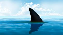 Shark fin above water (stock photo)