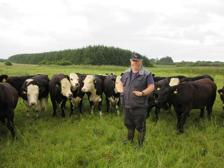 Christy Dowd pictured with some of the Hereford heifers on his farm near Tulsk, Co Roscommon