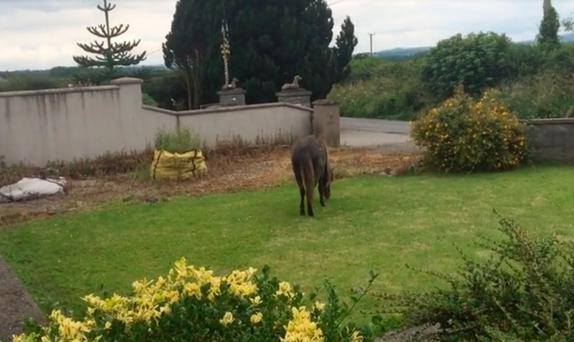 The horse collapsed after wandering into the garden. Picture Ben Lannigan (Facebook)