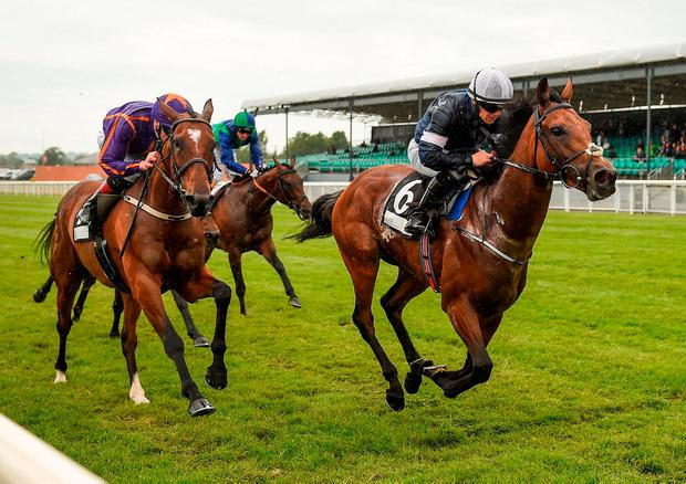 Rekindling winning the Group Two Curragh Cup at the Curragh. Photo: Seb Daly/Sportsfile