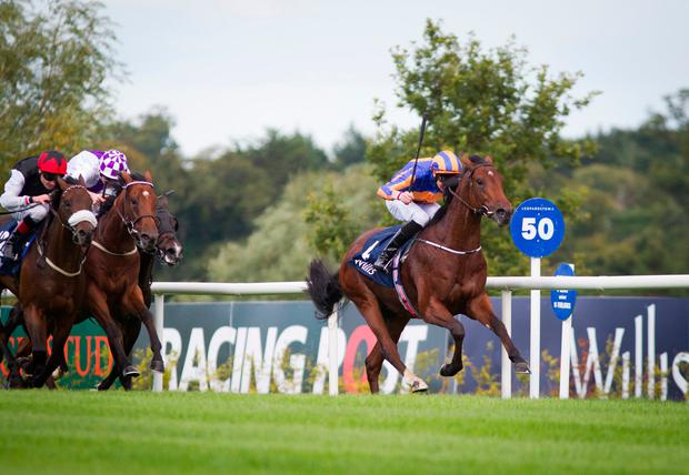 Johannes Vermeer is due to represent Aidan O'Brien at Newmarket next week. Pic: racingpost.com