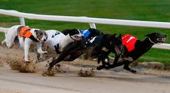 Astute Missile (No. 4) going on to win The English Greyhound Derby Final. Photo: Getty