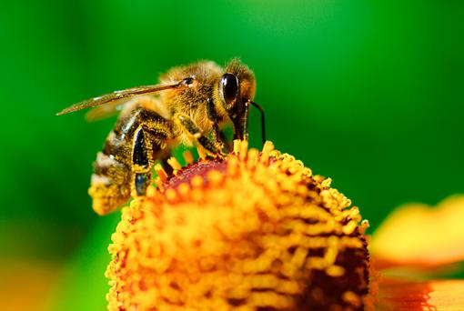 Seeing wild swarms means more to Pat than making honey.