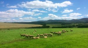 Grass growth has been well above normal on Michael Duffy's sheep farm in Kerrykeel on the Fanad Peninsula