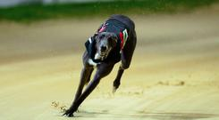 Paul Young's Bubbly Bluebird heads the betting and he will race in the red jacket. Photo: Stock Image