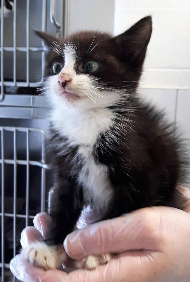 This Little Cross Eyed Kitten Who Was Rescued By The Dspca Is Stealing Everyone S Hearts