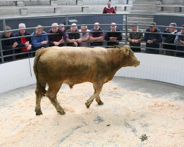 14/7/2017 Roscommon Mart Celebrating 58 years in Business. Lot Number. 34 Weight 575K DOB 17/8/15 SEX Bullock Breed CHX Price €1400 Photo Brian Farrell