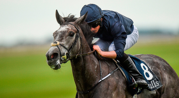 Winter, here winning the Irish 1,000 Guineas, is to step up in distance. Photo by Cody Glenn/Sportsfile
