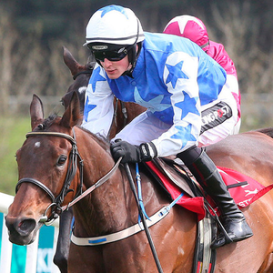 Willie Mullins saddles Airlie Beach at Killarney today. Photo: Caroline Norris