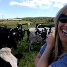 Sharon Shannon plays for a field of appreciative cows