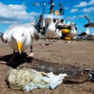 Gulls, as carriers of salmonella, constitute little health hazard to human health, according to Health Minister Simon Harris. Photo: PA