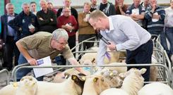 Ronan Collins, Kepak lamb procurement manager, with James Belton from the Longford Lamb Producer Group