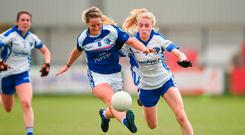 Donna English of Cavan in action against Laura Nerney of Laois. Photo: Barry Cregg/Sportsfile