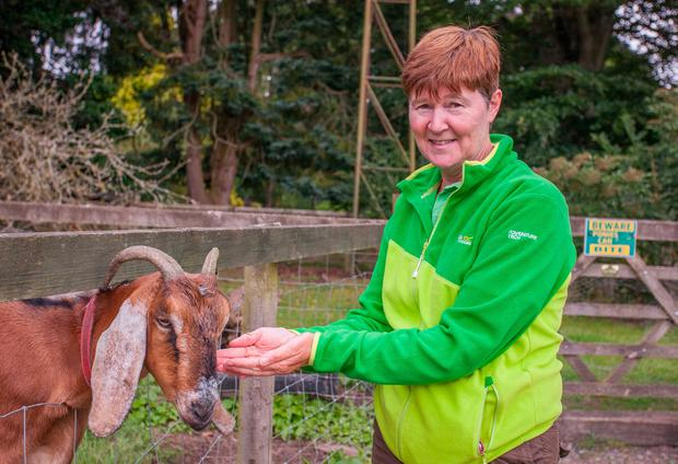 Jackie gets busy during feeding time on Stonebrook Pet Farm