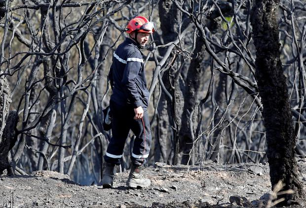 A firefighter walks past burned trees after a fire in Bormes-les-Mimosas, in the Var department, France, July 27, 2017. REUTERS/Jean-Paul Pelissier