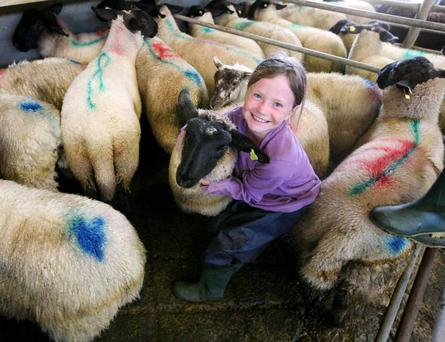 28/7/2017 Ballymote Sheep Mart Sheep girl Laura Hillery helping her father Sean at the mart. Photo Brian Farrell