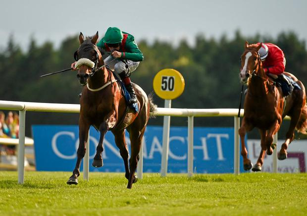 Timiyan [left] winning at the 2014 Galway Festival for then trainer Dermot Weld. Photo: Barry Cregg / Sportsfile