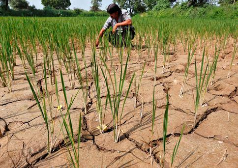 A rise of 2C could lead to widespread global drought. Photo: REUTERS