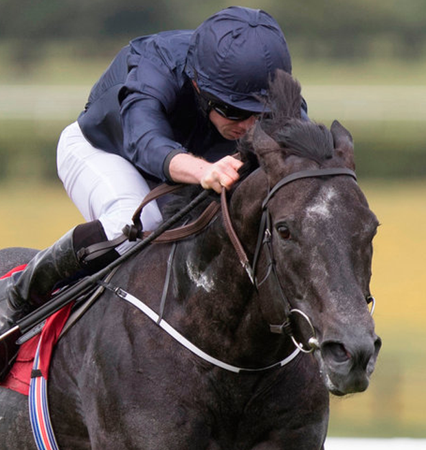 After winning at Royal Ascot for the second year in succession with victory in the Commonwealth Cup, the Aidan O'Brien-trained speed machine suffered the first defeat of his career last time out when finishing fourth in the July Cup at Newmarket. Photo: Racing Post
