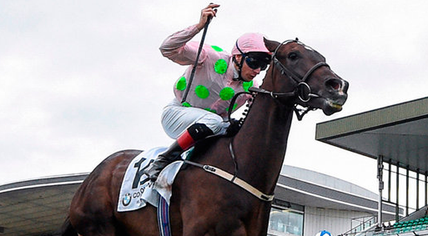 Willie Mullins' Riven Light finishes tailed off last in €770,000 Korea Cup