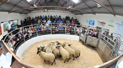 Farmers attend the Tullow Sheep Breeders Association 30th Show and Sale. Image: Roger Jones