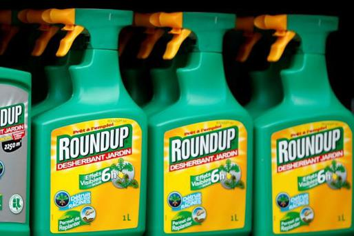 Glyphosate kills weeds by blocking proteins essential to plant growth and has been used in commercial weedkilling products since the 1970s. Stock pic: REUTERS